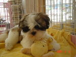 静岡県富士市のペットショップ仔犬の家Poccke5-06.JPG04394.JPG