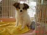 静岡県富士市のペットショップ仔犬の家Poccke5-10.JPG04394.JPG