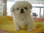 静岡県富士市のペットショップ仔犬の家Poccke5-11.JPG04394.JPG