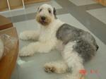 静岡県富士市のペットショップ仔犬の家Poccke6-11.JPGDSC04639.JPGDSC04649.JPG