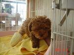 静岡県富士市のペットショップ仔犬の家Poccke6-14.JPGDSC04639.JPGDSC0DSC04654.JPGDSC04659.JPG