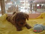静岡県富士市のペットショップ仔犬の家Poccke6-15.JPGDSC04639.JPGDSC04667.JPG