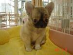 静岡県富士市のペットショップ仔犬の家Poccke6-30.JPGDSC04801.JPG