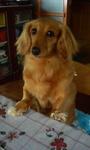静岡県富士市のペットショップ仔犬の家Poccke6-19.JPG