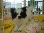 静岡県富士市のペットショップ仔犬の家Poccke6-23.JPGDSC04639.JPGDSC04717.JPGDSC04735.JPG