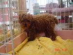 静岡県富士市のペットショップ仔犬の家Poccke6-26.JPGDSC04639.JPGDSC04717.JPGDSC04756.JPG