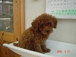 静岡県富士市のペットショップ仔犬の家Poccke6-27.JPG