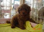 静岡県富士市のペットショップ仔犬の家Poccke6-28.JPGDSC04639.JPGDSC04717.JPGDSC04756.JPGDSC04780.JPG