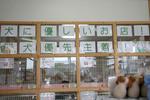 静岡県富士市のペットショップ仔犬の家Poccke(ポッケ)内観3.JPG
